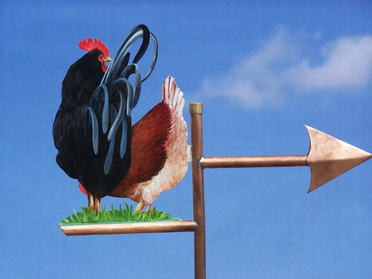 Coq et poule de dos